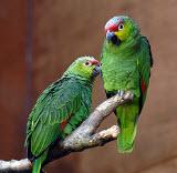 Montessori Types of Birds Flash Cards