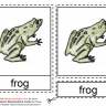 Montessori Materials - Frog Nomenclatures Age 6 to 9