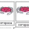 Montessori Materials - Crab Nomenclature Cards Age 3 to 6