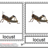 Montessori Insect Nomenclatures Age 3 to 6