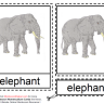 Montessori Materials - Elephant Nomenclature Cards Age 3 to 6