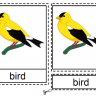 Montessori Materials, Parts of a Bird Nomenclature Cards, Age 3 to 6