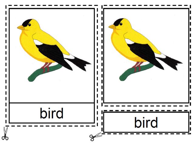 Montessori Materials, Parts of a Bird Nomenclature Cards ...