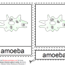 Montessori Materials - Amoeba Nomenclature Cards :