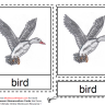 Montessori Materials - Bird Nomenclature Cards Age 6 to 9
