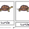 Montessori Materials - Turtle Nomenclatures Age 3 to 6