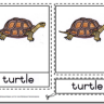 Montessori Materials Turtle Nomenclature Cards Age 6 to 9