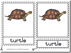 Parts of the Turtle Cards from Montessori Helper