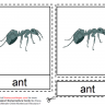 Montessori Ant Nomenclatures Age 3 to 6
