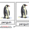 Montessori Materials, Parts of the Penguin, Age 3 to 6