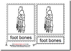 Montessori Human Foot Cards