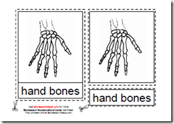 Montessori Human Hand Materials