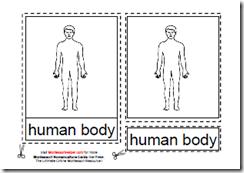 Montessori Human Body Materials