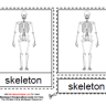 Montessori Human Skeleton Materials, Age 3 to 6