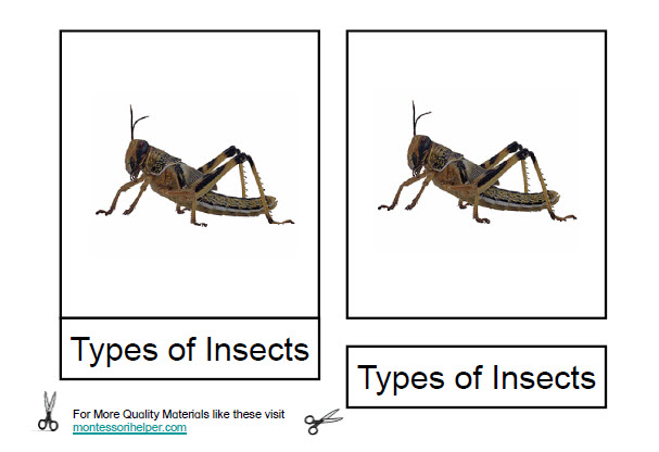 FREE Montessori Insect Nomenclatures Age 3 to 6