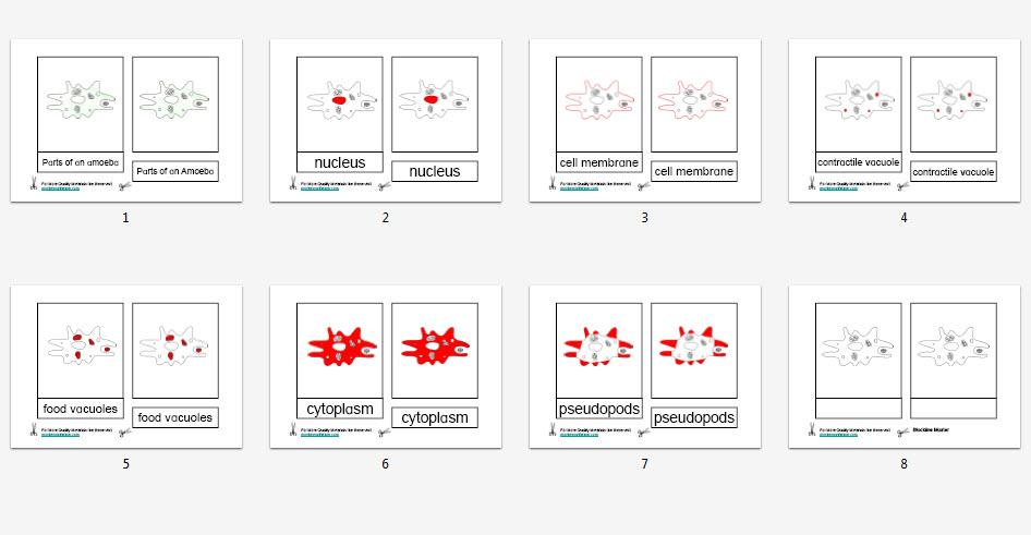 Montessori Materials – Amoeba Nomenclature Cards