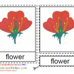 Montessori Materials Flower Nomenclature Cards Age 3 to 6