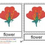 Montessori Materials Flower Nomenclature Cards Age 3 to 6