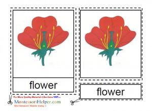 Montessori Parts of a Flower Materials