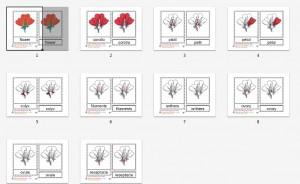 Montessori Parts of a Flower Printables