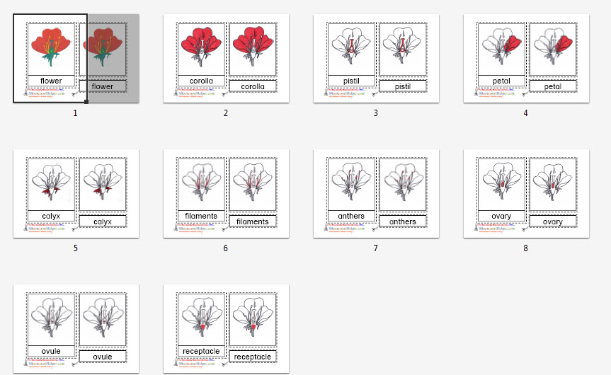 Common Worksheets » Montessori Free Printable Materials