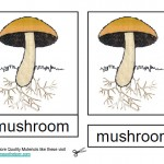 Parts of a Mushroom, Montessori Materials Cards, Age 3 to 6