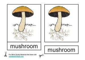 Montessori Parts of a Mushroom Materials