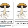 Parts of a Mushroom, Montessori Materials Cards, Age 3 to 6
