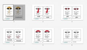 Montessori Parts of a Mushroom Printables