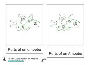 Montessori Parts of an Amoeba Materials