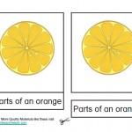 Montessori Materials Orange Nomenclature Cards Age 3 to 6