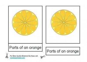 Montessori Parts of an Orange Materials