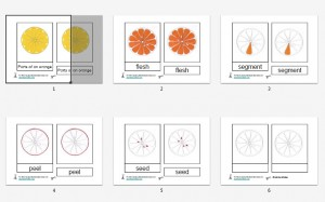 Montessori Parts of an Orange Printables