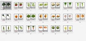 Montessori Types of Vegetables Printables