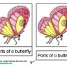 Montessori Materials – Butterfly Nomenclature Cards Age 6 to 9