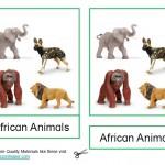 Montessori African Animals Printable Age 3 to 6