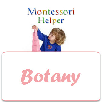 BotanyCourse