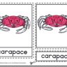 Montessori Materials – Crab Nomenclature Cards Age 3 to 6