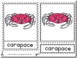 Montessori Materials – Crab Nomenclature Cards Age 3 to 6