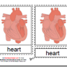 Montessori Materials, Parts of the Human Heart, Age 3 to 6