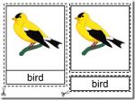Montessori Materials, Parts of a Bird Nomenclature Cards, Age 3 to 6