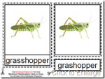 Montessori Grasshopper Nomenclatures Age 3 to 6