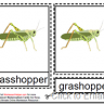 Montessori Grasshopper Nomenclatures Age 3 to 6