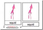 Montessori Downloadable PDF, Parts of the Squid, Age 3 to 6