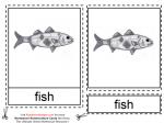 Montessori Materials – Fish Nomenclature Cards Age 6 to 9