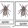 Montessori Materials – Spider Nomenclatures Age 6 to 9