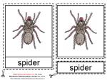 Montessori Materials – Spider Nomenclatures Age 6 to 9