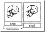 Montessori PDF Materials, Parts of the Human Skull, Age 3 to 6