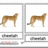Montessori Materials, Types of Wild Cats