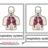 Parts of the Human Respiratory System, Age 3 to 6